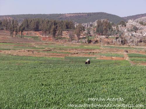 Aún hay muchas aldeas donde el arroz y las verduras diarias se cosechan como hace miles de años